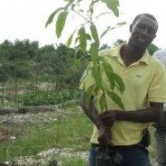 10,000 Trees for Haiti