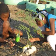 November 2012 Newsletter: 10,000 Trees for Haiti