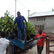 SOIL and the Scouts of Haiti Plant 800 Trees