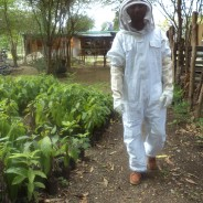 Bees Arrive at the SOIL Farm