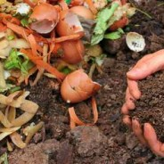 Food Tank: Food Hero: Sasha Kramer, How SOIL Works at the Nexus of Human Rights and Ecology