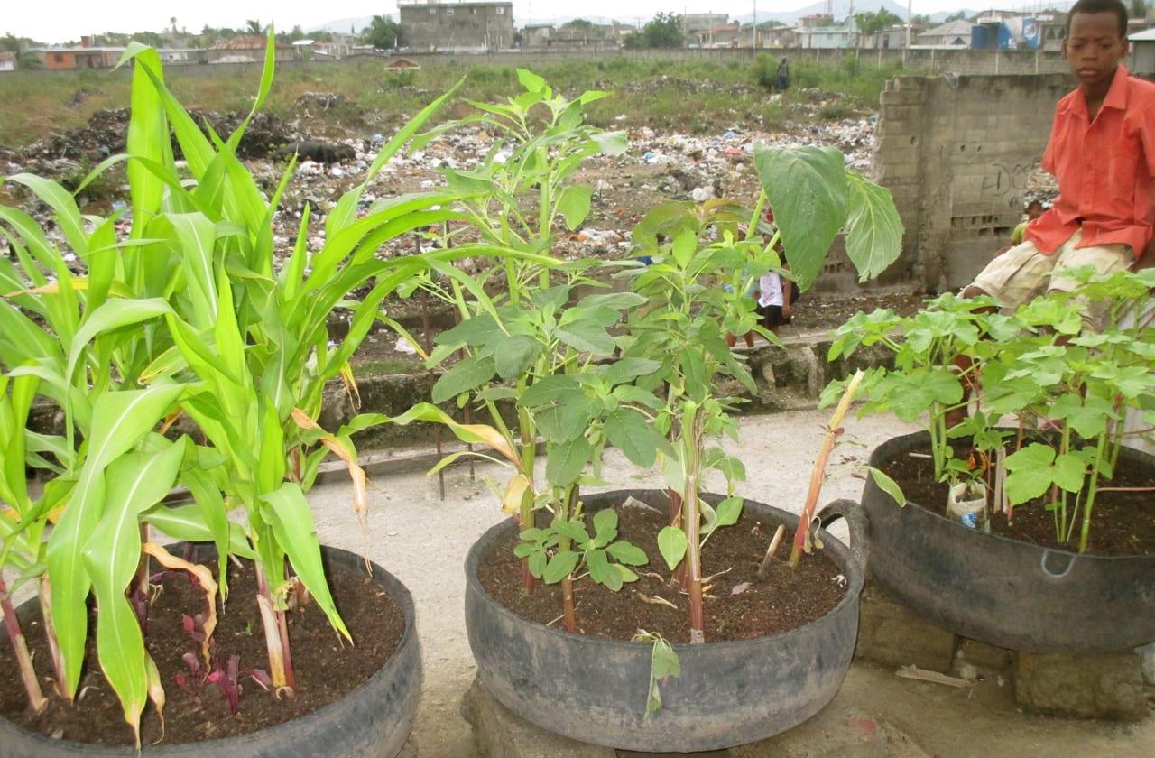 "A SOIL ""Jaden Kay"" household garden flourishes in Shada, Cap-Haitien"