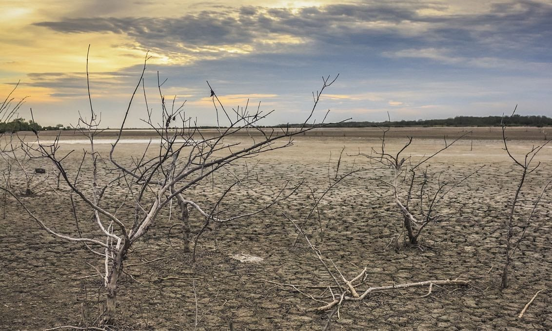 Restore soils
